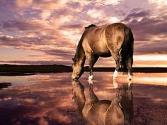 satisfied-horse1